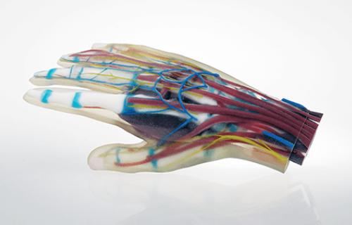 Des modèles médicaux de qualité supérieure imprimés en 3D