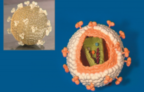 Une université utilise l'impression 3D pour faire progresser l'enseignement et la recherche